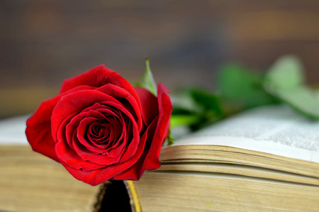 Photo for Valentines Day rose on old book - Royalty Free Image