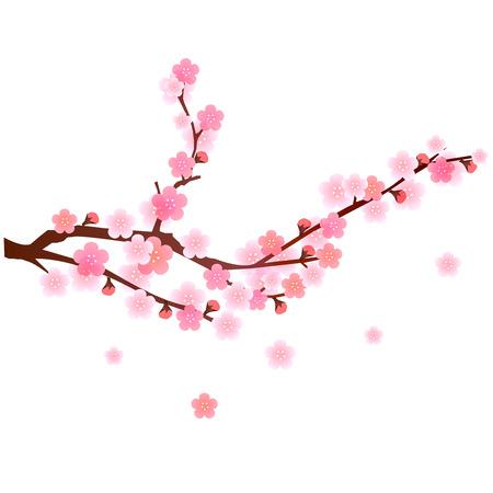 Plum flower background
