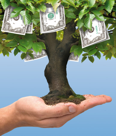 Photo pour Hundred dollars money tree growing on human hand - business concept - image libre de droit