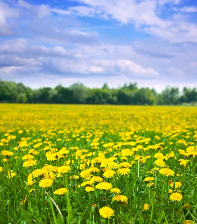 Foto de Summer landscape with dandelions meadow in sunny summer day - Imagen libre de derechos