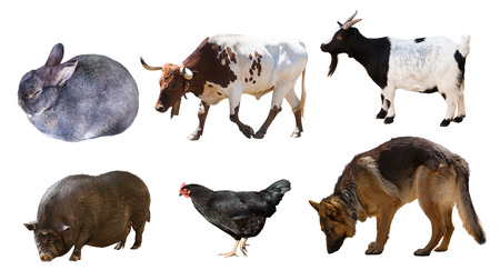 Set of  Shepherd and other farm animals. Isolated over white