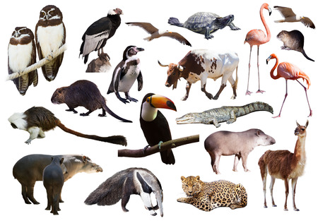 Set of  South American animals. Isolated over white