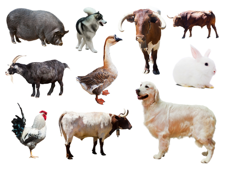 Set of dogs and other farm animals. Isolated over white background