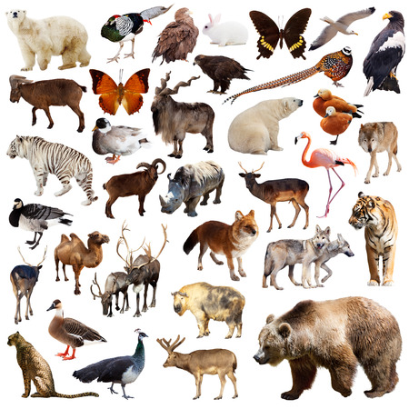 Brown bear and other asian animals. Isolated on white background