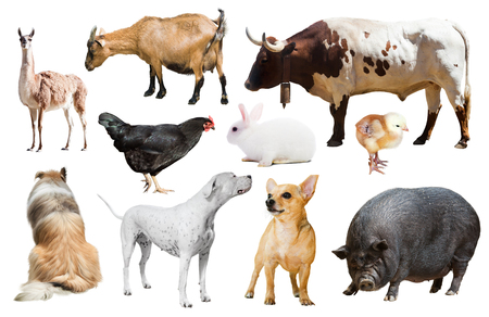 Set of dogs and other farm animals. Isolated