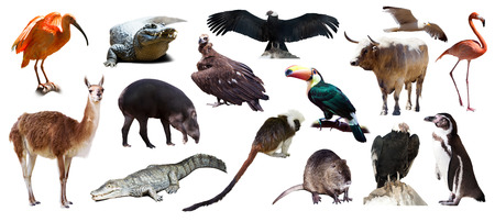 Set of  South American animals over white background