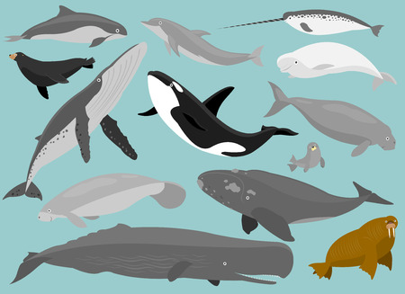 Illustration for 13 Marine Mammals in simplified flat cartoon  - Royalty Free Image