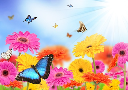 Photo for Spring meadow - Royalty Free Image