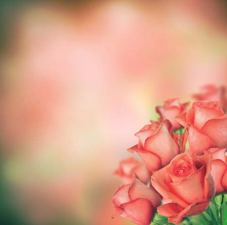 Isolated bouquet of roses with abstract blur background