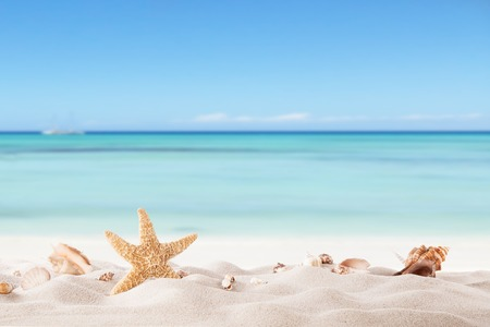Photo pour Summer concept with sandy beach, shells and starfish  - image libre de droit
