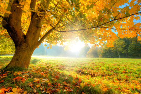 Foto de Autumn scenery with dry leaves and sunshine - Imagen libre de derechos