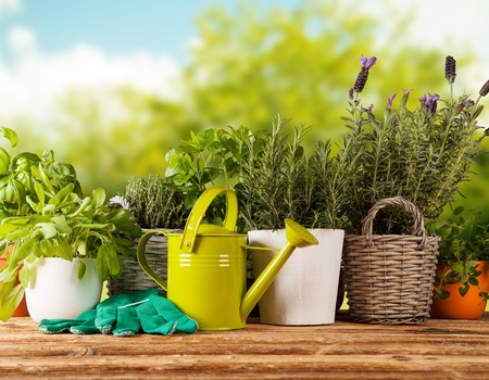 Various kinds of fresh herbs in flowerpots, placed on wooden table