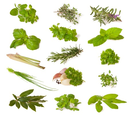 Photo pour Various kind of fresh herbs isolated on white background - image libre de droit