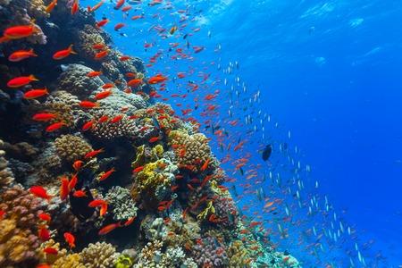Foto de Beautiful coral reef with fish in Red sea - Imagen libre de derechos