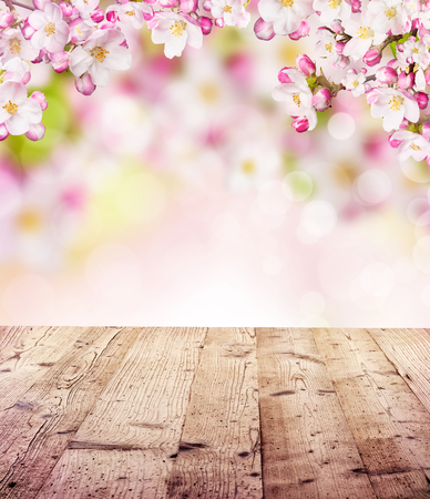 Foto de Cherry blossoms over blurred nature background and empty wooden planks. Copyspace for text - Imagen libre de derechos