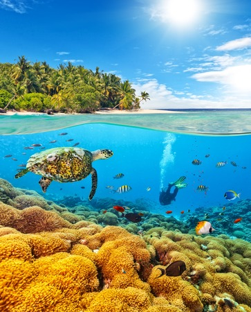 Photo for Underwater view of coral reef and scuba diver and turtle with horizon and water surface split by waterline. Beautiful nonsettled tropical island on background. Summer holiday concept. High Resolution - Royalty Free Image