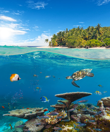 Foto de Underwater coral reef seabed and water surface with tropical island - Imagen libre de derechos