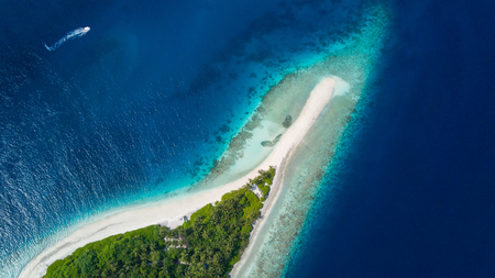 Foto de Beautiful aerial view of Maldives tropical beach with palms and white sand. Travel and vacation concept - Imagen libre de derechos
