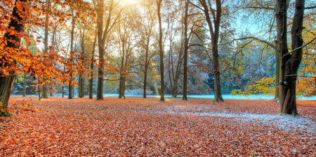 Photo for Beautiful colored trees in autumn, landscape photography. Snow on background. Late autumn and early winter period. Outdoor and nature. - Royalty Free Image