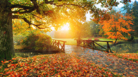 Foto de Beautiful autumn scenery in park. Outdoor photography in sunrise light - Imagen libre de derechos
