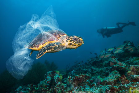 Photo pour Underwater concept of global problem with plastic rubbish floating in the oceans. Hawksbill turtle in caption of plastic bag - image libre de droit