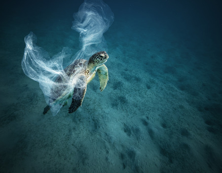 Foto de Underwater concept of global problem with plastic rubbish floating in the oceans. Hawksbill turtle in caption of plastic bag - Imagen libre de derechos