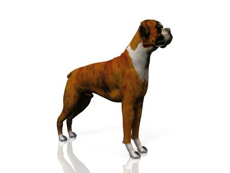 Photo pour bulldog - image libre de droit