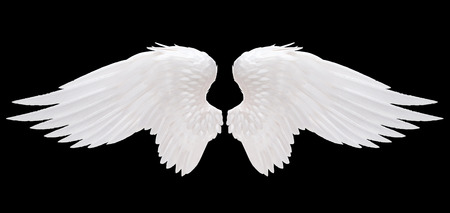 Photo for white angel wing isolated - Royalty Free Image