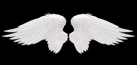 Foto de white angel wing isolated - Imagen libre de derechos