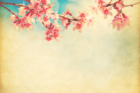 spring sakura pink flower  on sun sky vintage color toned abstract nature