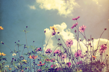 Photo pour Vintage photo of nature background with wild flowers and plants - image libre de droit