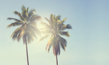 Photo pour Vintage coconut palm tree on beach blue sky with sunlight of morning in summer - image libre de droit