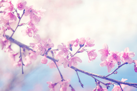 Foto de spring sukura pink flower with sun sky vintage color toned abstract nature background - Imagen libre de derechos