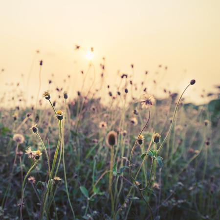 Foto de Vintage photo of nature background with wild flowers and plants in sunset - Imagen libre de derechos
