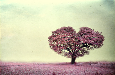 Photo pour Vintage of pink tree heart shape ,paper art texture - image libre de droit