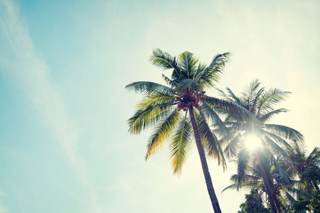 Photo pour Vintage nature background of coconut palm tree on tropical beach blue sky with sunlight of morning in summer, retro effect filter - image libre de droit