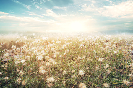 Foto de Landscape of flower with sun sky, vintage color effect - Imagen libre de derechos