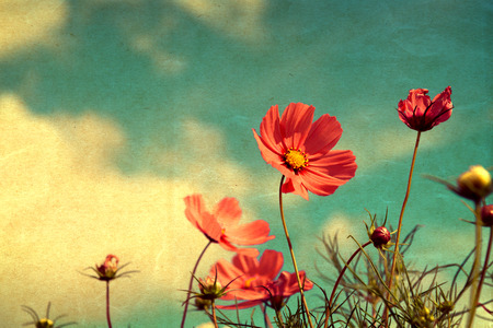 Foto per vintage cosmos flower - paper art texture, nature background - Immagine Royalty Free