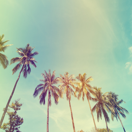 Photo pour Landscape of palm trees at tropical coast, vintage effect filter and stylized - image libre de droit