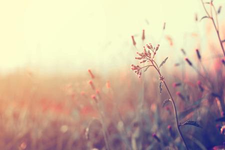Photo pour Vintage wild flower in sunset, retro  filter effect - image libre de droit