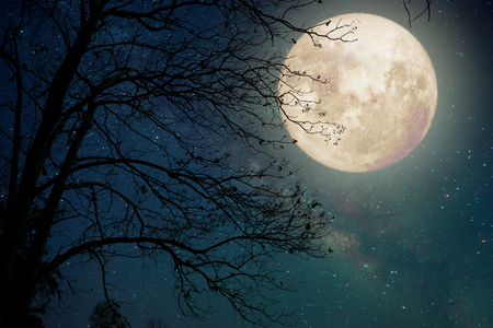 Photo pour Milky Way star in night skies, full moon and old tree - Retro style artwork with vintage color tone (Elements of this moon image furnished by NASA) - image libre de droit