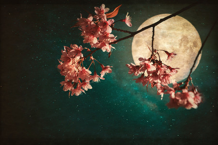 Photo for Antique and vintage style photo - Beautiful pink cherry blossom (sakura flowers) in night of skies with full moon and milky way stars. - Royalty Free Image