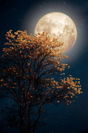 Photo pour Beautiful tree yellow flower blossom with milky way star in night skies full moon - Retro fantasy style artwork with vintage color tone. - image libre de droit
