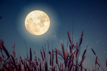 Foto de Beautiful autumn fantasy - wild flower in fall season and full moon with milky way star in night skies background. Retro style artwork with vintage color tone - Imagen libre de derechos