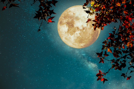 Foto de Beautiful autumn fantasy - maple tree in fall season and full moon with milky way star in night skies background. Retro style artwork with vintage color tone - Imagen libre de derechos