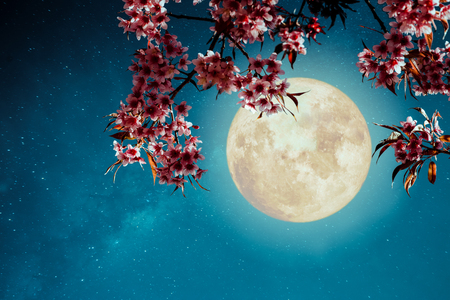 Photo pour Romantic night scene - Beautiful cherry blossom (sakura flowers) in night skies with full moon.  - Retro style artwork with vintage color tone. - image libre de droit