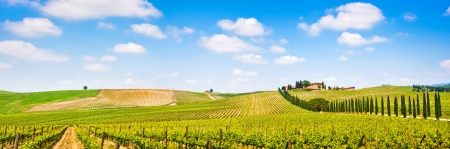 Photo pour Panoramic view of scenic Tuscany landscape with vineyard in the Chianti region, Tuscany, Italy - image libre de droit