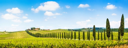 Foto de Panoramic view of scenic Tuscany landscape with vineyard in the Chianti region, Tuscany, Italy - Imagen libre de derechos
