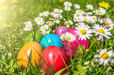 Photo for Beautiful view of colorful Easter eggs lying in the grass between daisies and dandelions in the sunshine - Royalty Free Image