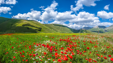 Photo pour Beautiful summer landscape at Piano Grande Great Plain mountain plateau in the Apennine Mountains, Castelluccio di Norcia, Umbria, Italy - image libre de droit